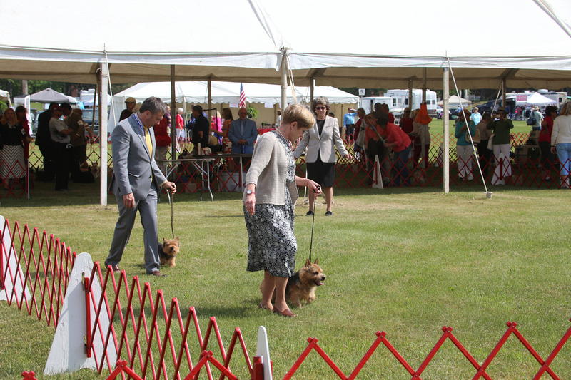 Show Dog Training New Providence Nj